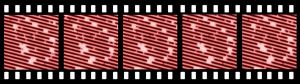 Example: Five of STM frames from a movie where the stability and dynamics of Pt dimers on Pt(110)-(1×2) are studied. The frames have been plane corrected and drift compensated in x and y by SPIP™.